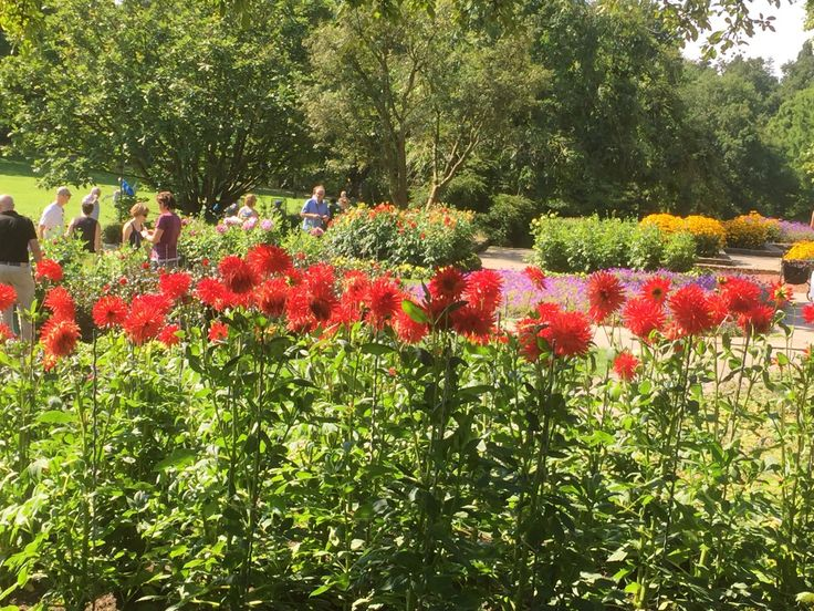 Von wegen grau: Es grünt und blüht im Grugapark Essen