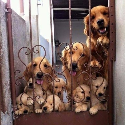 This is how I want to be greeted when I come home