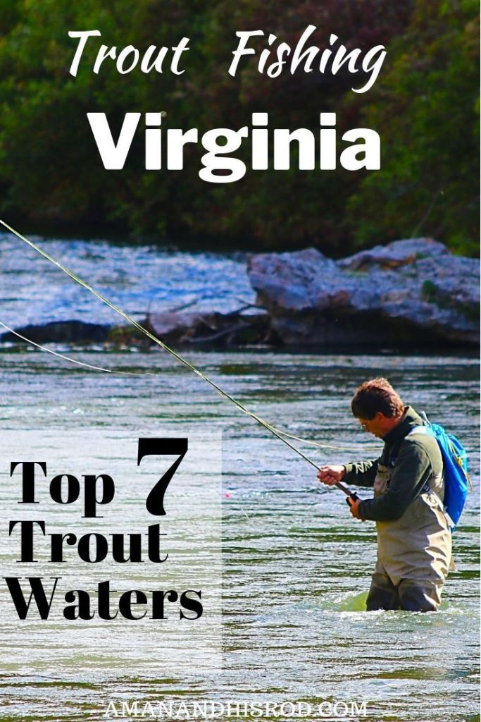 Trout Fishing Virginia Top 7 Spots For Trout Fisherman A Man And His Rod Trout Fishing Trout Fishing Tips Trout Fisherman