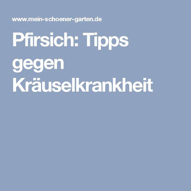 Pfirsich: Tipps gegen Kräuselkrankheit