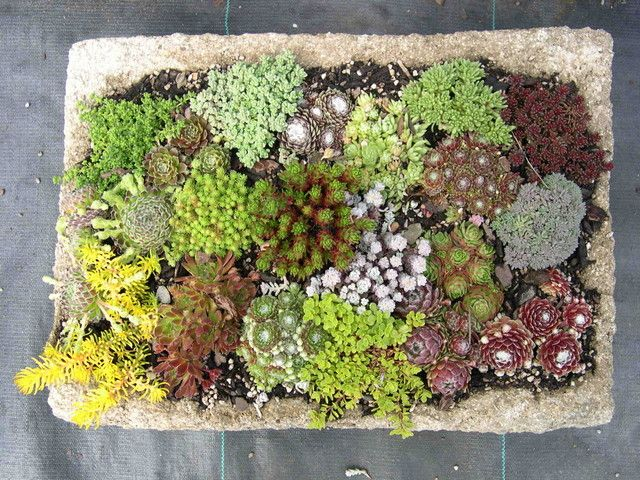 48 best trough gardens images on Pinterest Concrete garden