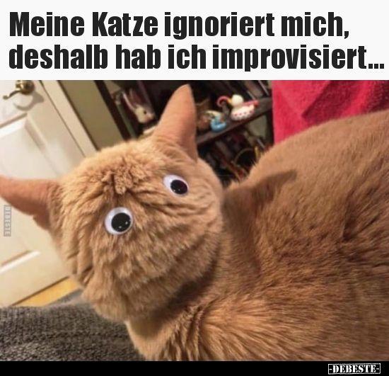 Meine Katze ignoriert mich, also habe ich .. – Lustige Bilder