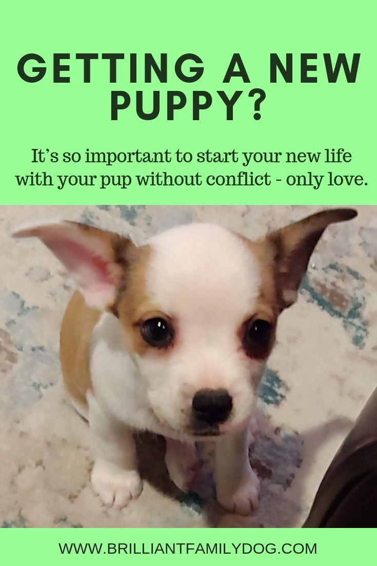 Got A New Puppy Wonderful Now Find Out How To Make Your Pup The