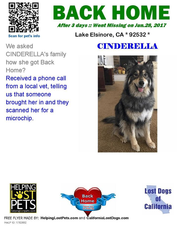 "We are very happy to report Cinderella is BACK HOME after 3 days! ""Received a phone call from a local vet telling us that someone brought her in and they scanned her for a microchip."" Welcome home Cinderella! #reunited #lostdogsca #HelpingLostPets HeLP ID #1782692"