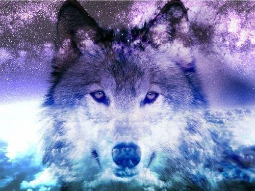 wolf galaxy tumblr - Recherche Google