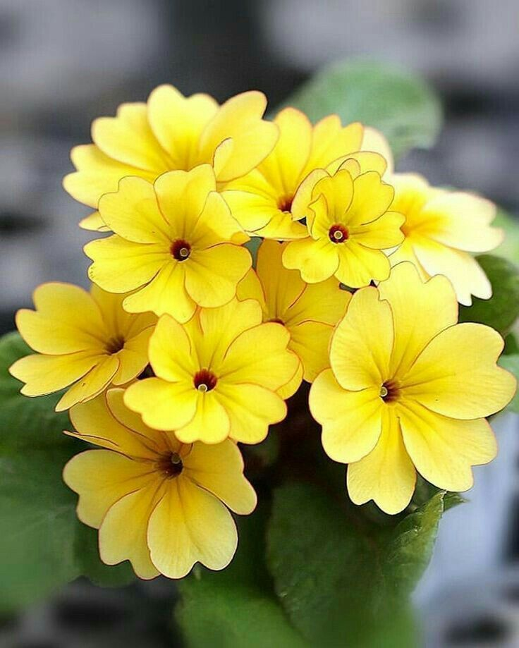 Fiori Gialli Yellow Flowers.Fiori Gialli Beautiful Flowers Flowers Nature Flower Pictures