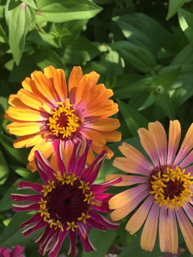 Starting from Scratch | Fine Gardening
