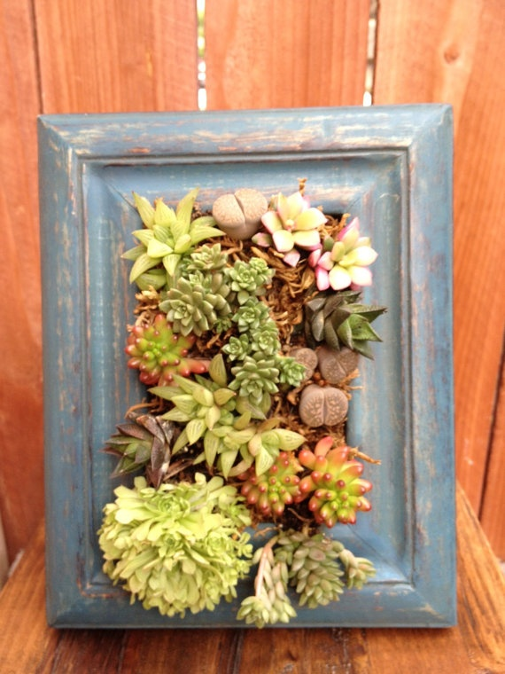 fathers day gift succulent frame via etsy