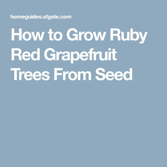 How to Grow Ruby Red Grapefruit Trees From Seed