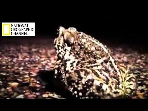 Animals The Mysteries of Amphibian species Wildlife Full HD Documentary