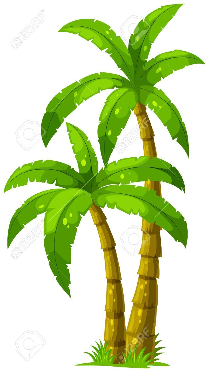 Illustration Of The Two Palm Trees On A White Background Palm Tree Drawing Palm Tree Vector Cartoon Palm Tree