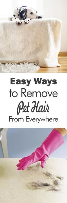 Easy Ways to Remove Pet Hair From Everywhere| Pet Hair Removal, Pet Hair Removal Hacks, Clean Home, Home Cleaning, Home Cleaning Tips, Cleaning Hacks #PetHair #PetHairRemoval #PetHairRemovalTips #Cleaning #CleanHome