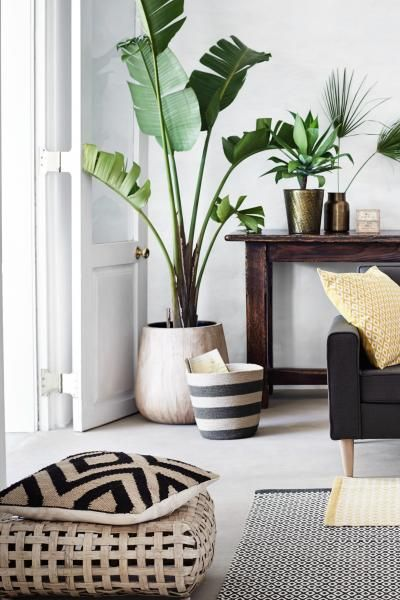 Neutral white accessories with  plants