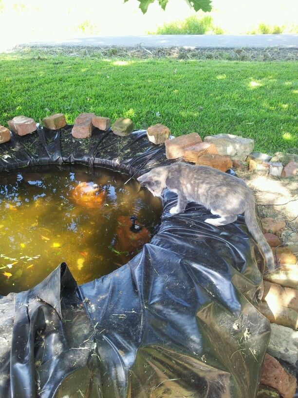 17 best images about old tractor tires on pinterest old for Tarpaulin fish pond