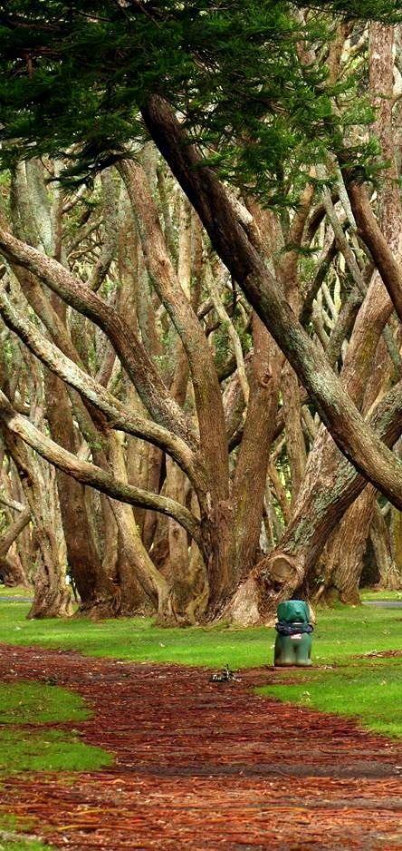Lovely Tree Hill in Auckland, Albert Park, New Zealand