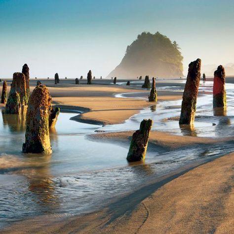 Oregon Coast's ghost forest: Low tide on Nesko…