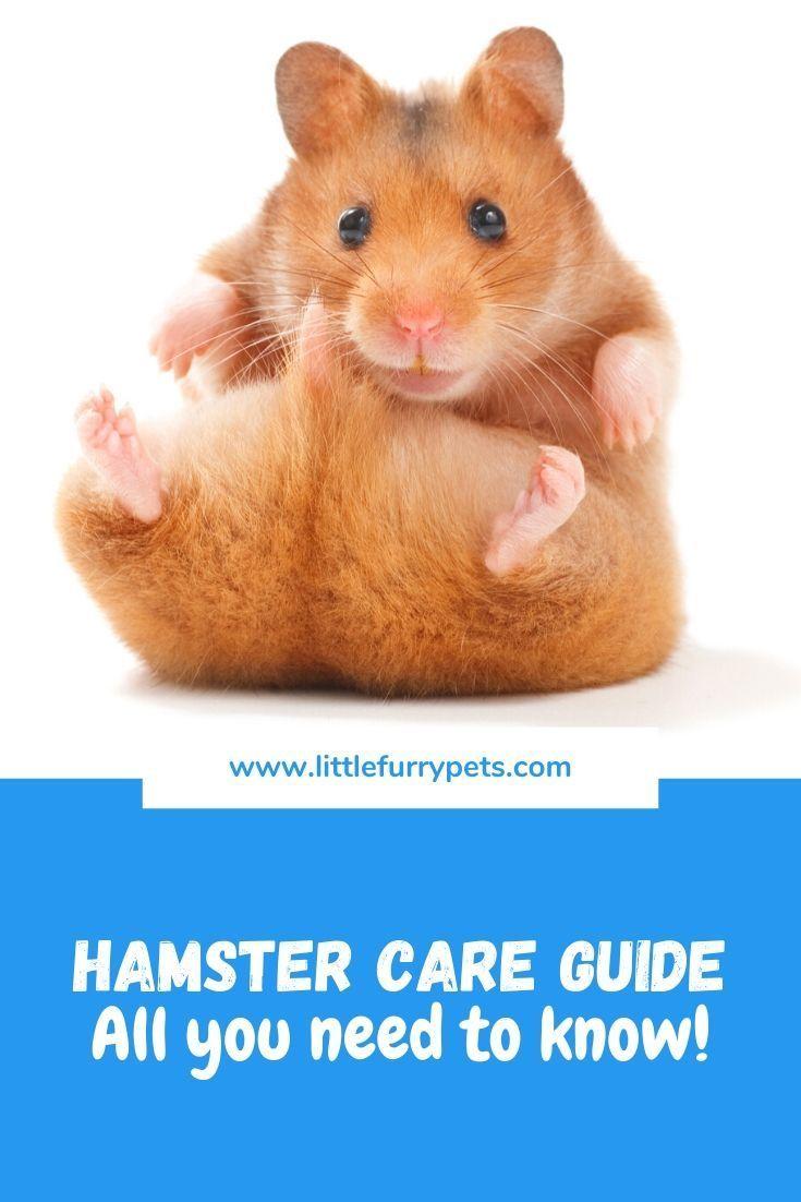 Hamster Care Guide Hamster Care Hamster Hamster Breeds
