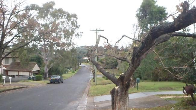 Examples of tree pruning at Campbelltown.