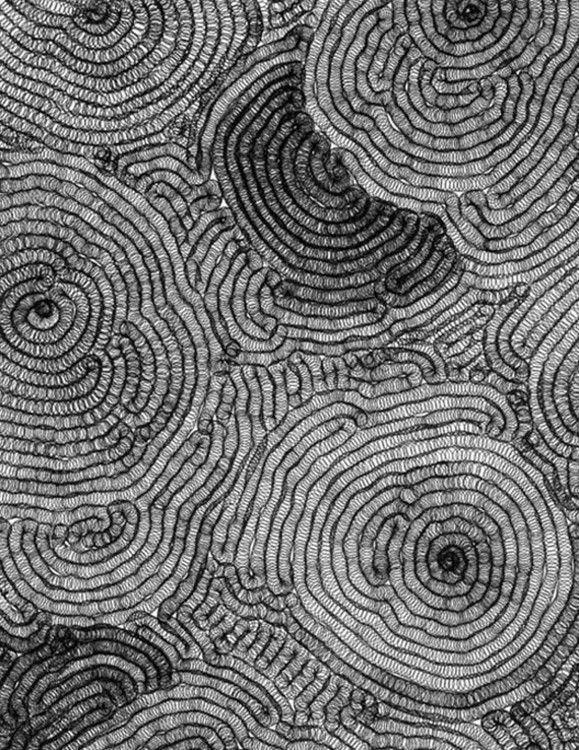 Tara Donovan  Detail of Untitled Ballpoint Pen Drawing, 2002