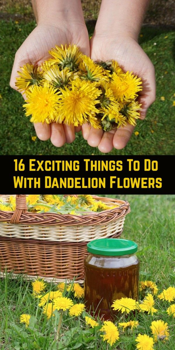 16 Exciting Things To Do With Dandelion Flowers In 2020 Dandelion Flower Dandelion Flowers