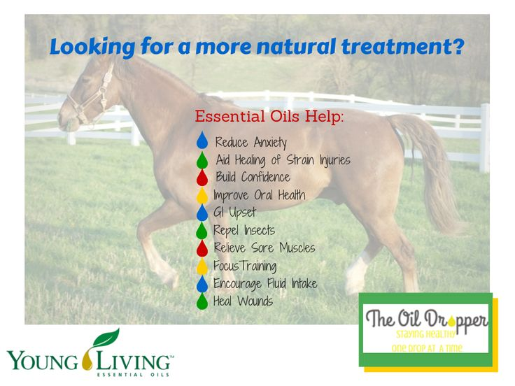 Natural Remedies For Skin Allergies In Horses