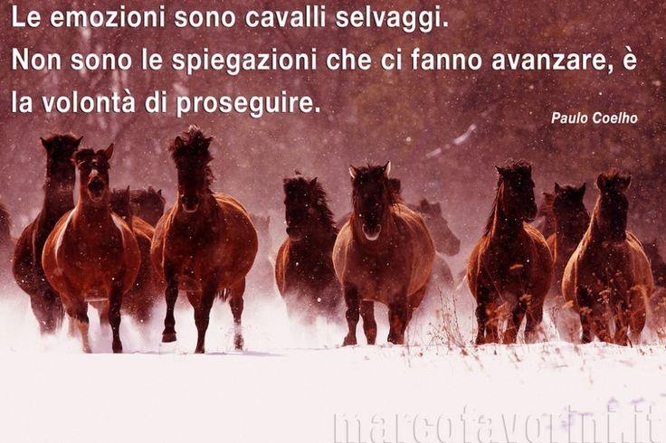 Le emozioni sono cavalli selvaggi