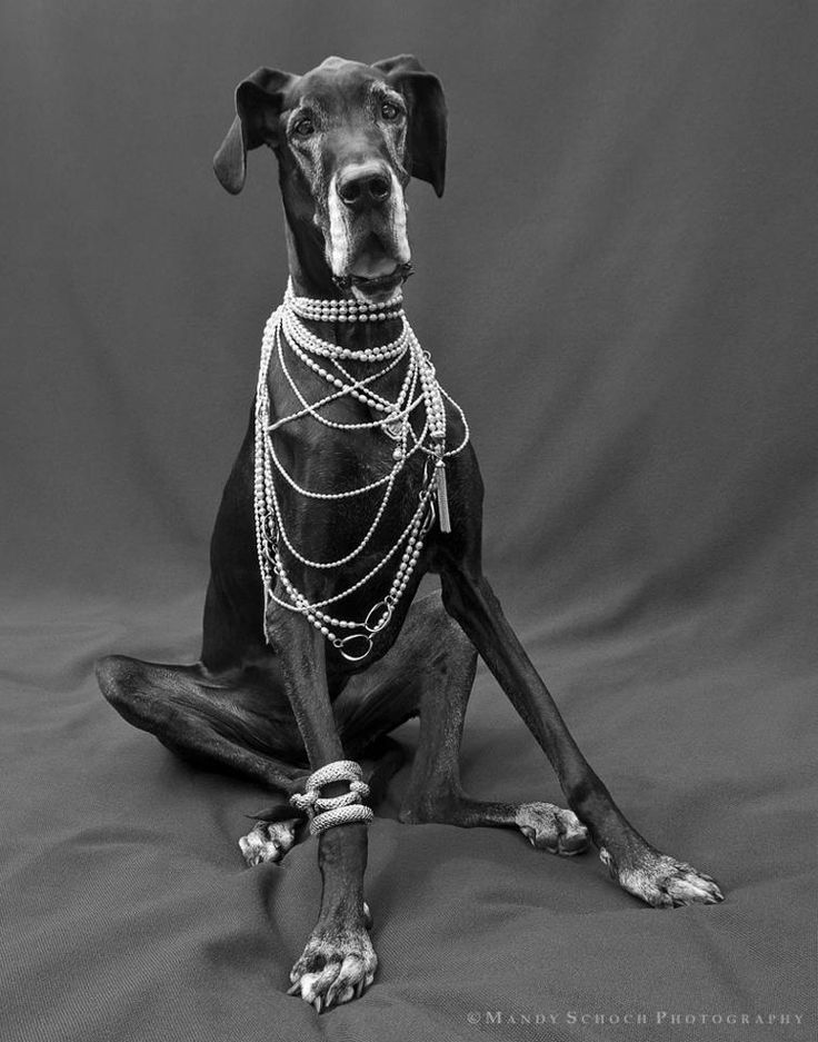Gigi Metzger the Great Dane in Slane Jewelry - love this look what a great Pearly Pet!!