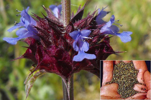 A csapból is az antioxidánsok és a bifidus essensis folyik - most eláruljuk, melyik az a hétköznapi növény, mely mindennél többet