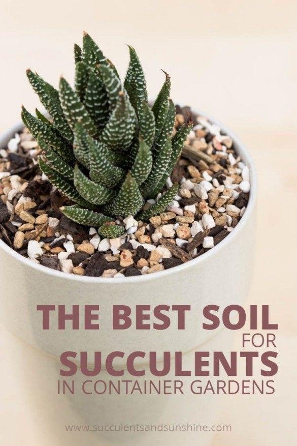 80 best shamba images on pinterest exotic flowers for Soil for succulents