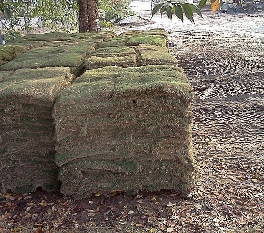 Things you should know before you purchase sod