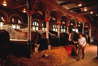 Budweiser Clydesdale S Barn Gorgeous Horses Pinterest