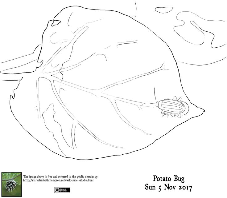 Traceable for Potato Bug