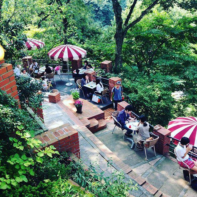 まるでラピュタの世界天空のカフェ樹ガーデンで癒しを