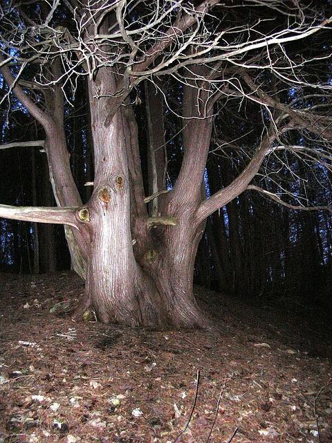 Lovely old tree by lynn_in_ontario, via Flickr