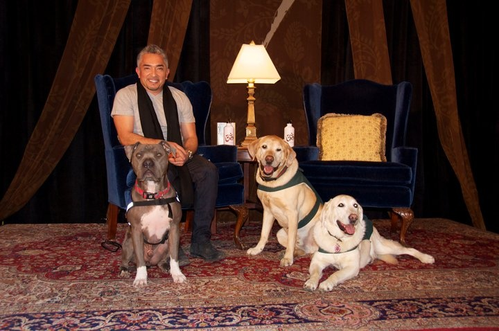 Mavis and Beau on their best behavior to welcome Cesar Milan and Junior to The Fairmont Hotel Vancouver.
