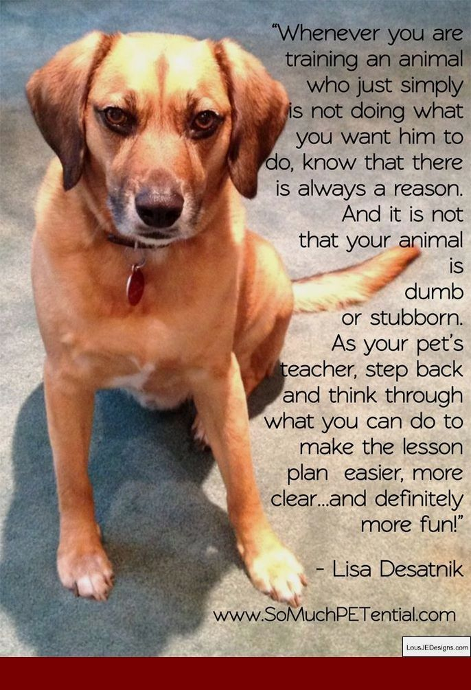 How To Train Your Older Dog To Go To The Bathroom Outside And Pics Of How To Train Your D With Images Dog Training Dog Training Classes Agility Training For Dogs