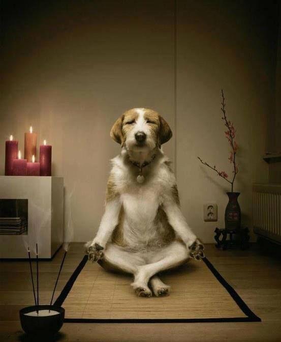 La saggezza, nella vita, consiste nell'eliminare le cose non essenziali. - Lin Yutang http://www.ilgiardinodeilibri.it/libri/__la-sfida-delle-100-cose.php?pn=3314