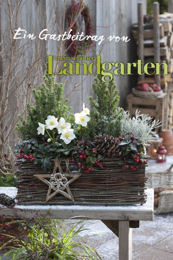 Inspiring Outdoor Decorating - a container made of branches is such a beautiful way to display potted spruce and Christrose (white flowers that bring the arrangement to life) and a natural garland of greenery with red fruit. This is a perfect display for Christmas thru the winter months - via Mien Schoenes Land Bloggt