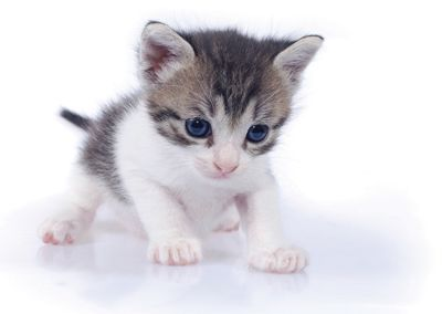 Kitten #postcards