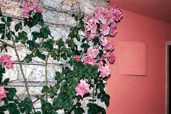 Colores difuminados o escalados entre pared, color de la rosa y la piedra, para fachada