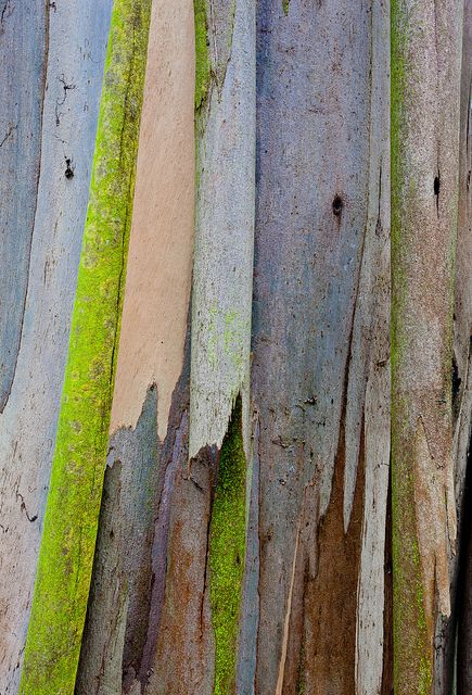 Eucalyptus These chipped and broken wood panels has been left to erode and break away, yet they have been brought back to life with the vibrant paint colour which create a very eye pleasing contrast against each other.