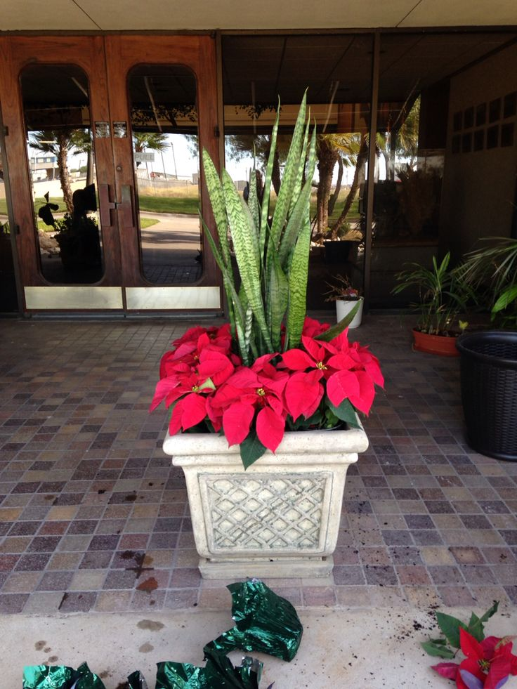 Commercial Planter Box With Poinsettias Outdoor