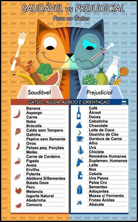Alimentação Gatos
