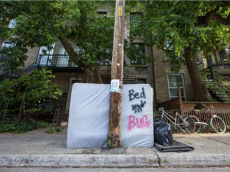 An apparently bed-bug infested mattress sits curb-side for garbage pickup on Jeanne-Mance street in the Mile-End neighbourhood of Montreal.