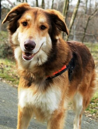 Tiervermittlung Hunde