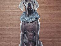 christmas xmas dog canon silver studio grey ryan abby garland weimaraner had ritchie 5dmk2 ryantron