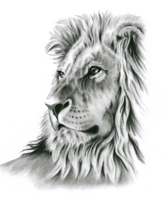 Roaring Lion Profile Tattoo Charcoal Drawing, Char...