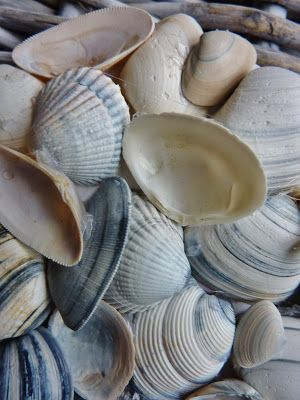 Schelpen - Sea shells #beach