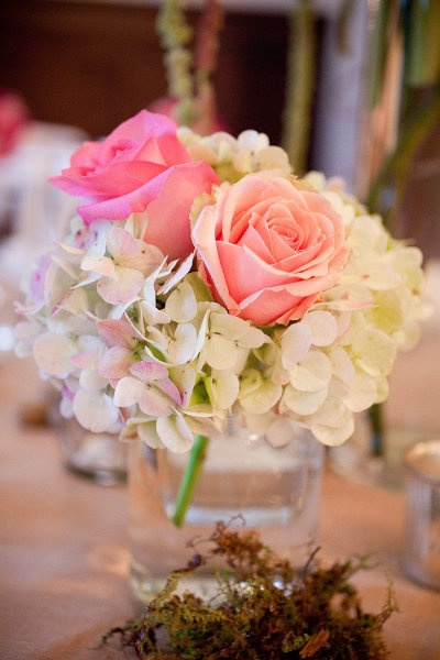 Best coral roses ideas on pinterest peach rose