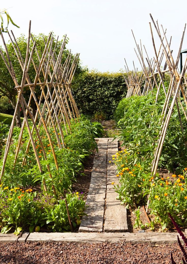 Love using old boards as a walkway in the garden. Benefits include Helping with erosion and excess moisture loss from the ground and you feet won't get muddy either. Win-win! :)